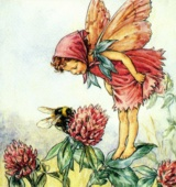 Cicely Mary Barker, Flower Fairies
